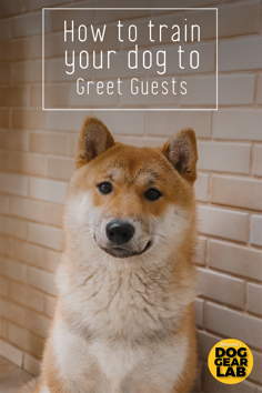 How to Train Your Dog to Welcome Guests Calmly
